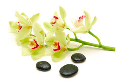 Orchidées vertes avec des pierres de massage Photographie stock