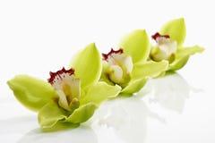 Orchidées vertes dans une rangée Photographie stock libre de droits