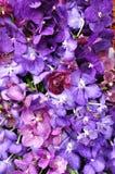 orchid ανασκόπησης πορφύρα Στοκ φωτογραφία με δικαίωμα ελεύθερης χρήσης