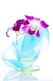 orchid απομόνωσης Στοκ Εικόνα
