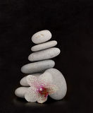 orchid βράχοι Στοκ Εικόνες
