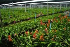 orchid βρεφικών σταθμών Στοκ εικόνες με δικαίωμα ελεύθερης χρήσης