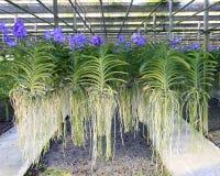 orchid κήπων Στοκ Εικόνες