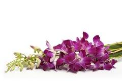 orchid κλάδων ροζ στοκ φωτογραφίες