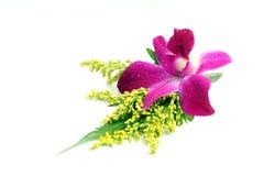 orchid κορσάζ στοκ εικόνα με δικαίωμα ελεύθερης χρήσης