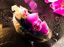 orchid κόκκινος κίτρινος Στοκ Εικόνα