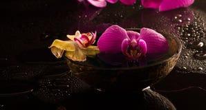 orchid κόκκινος κίτρινος Στοκ φωτογραφίες με δικαίωμα ελεύθερης χρήσης