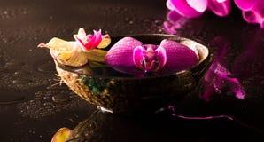 orchid κόκκινος κίτρινος Στοκ Εικόνες