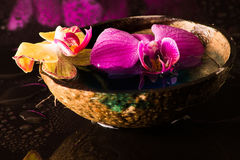 orchid κόκκινος κίτρινος Στοκ φωτογραφία με δικαίωμα ελεύθερης χρήσης