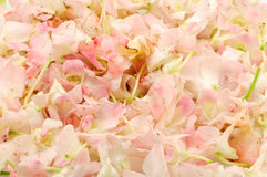 orchid λουλουδιών ανασκόπησ&et Στοκ φωτογραφίες με δικαίωμα ελεύθερης χρήσης