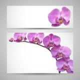 orchid λουλουδιών διάνυσμα προτύπων ελεύθερη απεικόνιση δικαιώματος
