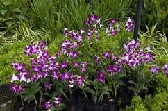 orchid λουλουδιών ροζ Στοκ φωτογραφίες με δικαίωμα ελεύθερης χρήσης