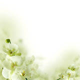 Orchid λουλούδια και πρασινάδα, floral ανασκόπηση Στοκ Φωτογραφίες