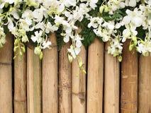 Orchid λουλούδια στο μπαμπού Στοκ φωτογραφία με δικαίωμα ελεύθερης χρήσης