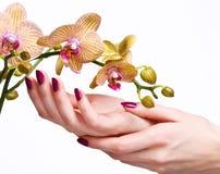 orchid μανικιούρ ροζ Στοκ Εικόνες