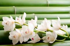 orchid μπαμπού λευκό Στοκ φωτογραφίες με δικαίωμα ελεύθερης χρήσης