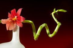 orchid μπαμπού Στοκ φωτογραφίες με δικαίωμα ελεύθερης χρήσης