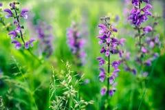 orchid λουλουδιών άγρια περι& Στοκ εικόνα με δικαίωμα ελεύθερης χρήσης