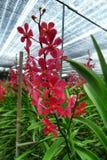 orchid λουλουδιών βουρτσών που χρωματίζει κόκκινος vectorized Στοκ εικόνα με δικαίωμα ελεύθερης χρήσης