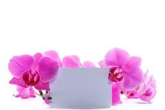 orchid ροζ phalaenopsis ρηγέ Στοκ Φωτογραφία