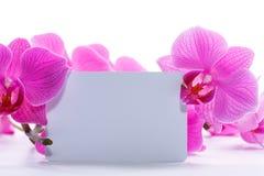 orchid ροζ phalaenopsis ρηγέ Στοκ εικόνες με δικαίωμα ελεύθερης χρήσης