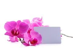 orchid ροζ phalaenopsis ρηγέ Στοκ φωτογραφίες με δικαίωμα ελεύθερης χρήσης