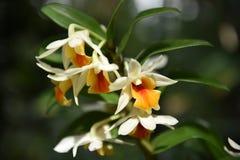 Orchid στον κήπο Στοκ Εικόνα