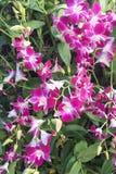 orchid φύλλων στοκ εικόνα με δικαίωμα ελεύθερης χρήσης