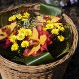 orchid χρυσάνθεμων στοκ φωτογραφία με δικαίωμα ελεύθερης χρήσης