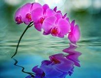 orchid ύδωρ στοκ εικόνα