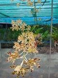 Orchid2,如果我们听见这朵兰花 感受恐惧与名字的多数 样式类似于那老虎 库存照片