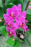 orchid 011 Royaltyfri Fotografi