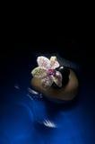 orchid στοκ εικόνες με δικαίωμα ελεύθερης χρήσης
