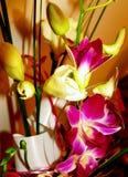 orchid Royaltyfri Foto