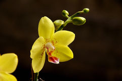 Orchid. Tropical flower, orchid from kitchen garden india Stock Photos