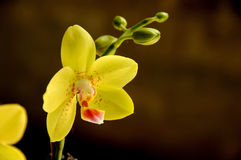 Orchid. Tropical flower, orchid from kitchen garden india Royalty Free Stock Image