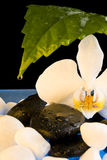 Orchid. White orchid and leaf and stones Royalty Free Stock Image