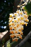 orchid Royaltyfria Bilder