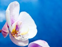 Orchid Stock Photo