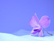 Free Orchid Royalty Free Stock Photo - 176595