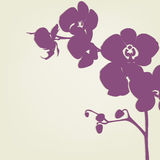 Orchid. Branch Silhouette, Vector Illustration stock illustration