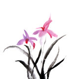 Orchid. Chinese painting of orchid flower on white background vector illustration
