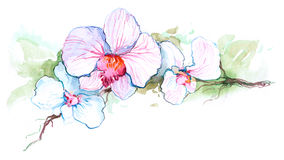 Orchid. Beautiful orchid flower (Cbm painting stock illustration