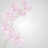 Orchid. Vector greetings card for holiday with orchid flowers Stock Photos