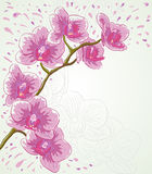 Orchid. Vector greetings card for holiday with orchid flowers Stock Photo