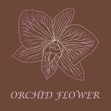 Orchid. Vector illustration with orchid flower Stock Photo