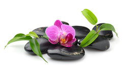 Orchid. Zen basalt stones and orchid isolated on white Royalty Free Stock Photos