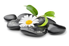 Orchid. Zen basalt stones and daisy isolated on white Stock Photo