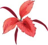 orchid Royaltyfri Fotografi
