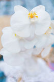 Orchid. White orchid outdoors in the afternoon Stock Photo
